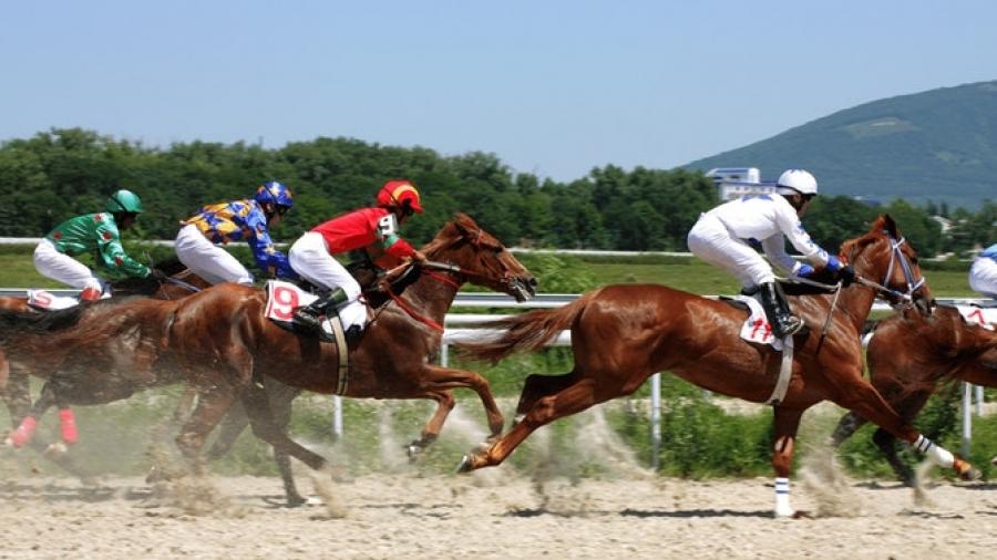 HORSE BETTING SPELLS