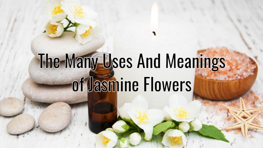 jasmine flowers for love
