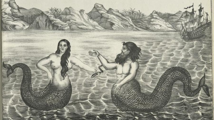 Idlozi le mermaid